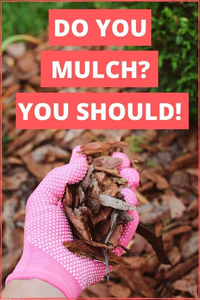 Mulching a garden is so important. These are some options to get your garden covered.