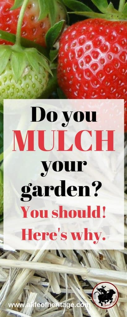 Mulching can really benefit your garden. But what do you need to know about it before you start?