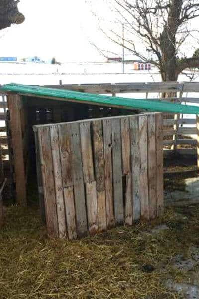 Pallet goat house that will keep goats warm and dry all winter long