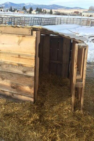 Pallet goat house fortified with more boards to keep out the wind