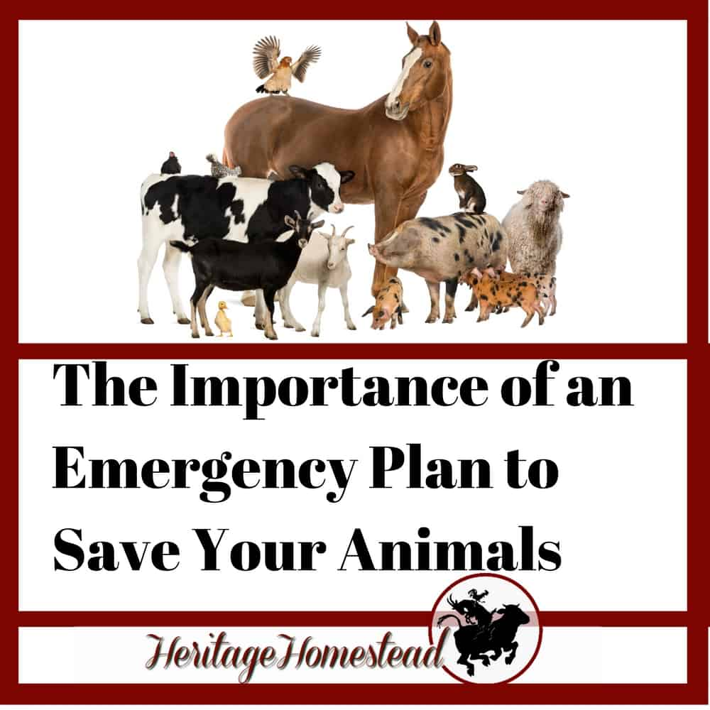 The Importance of an Emergency Plan to Save Your Animals