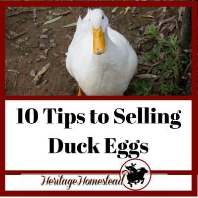 All the Duck Egg Facts (+10 Tips to Selling Duck Eggs)