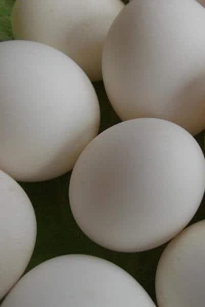 Duck eggs on table