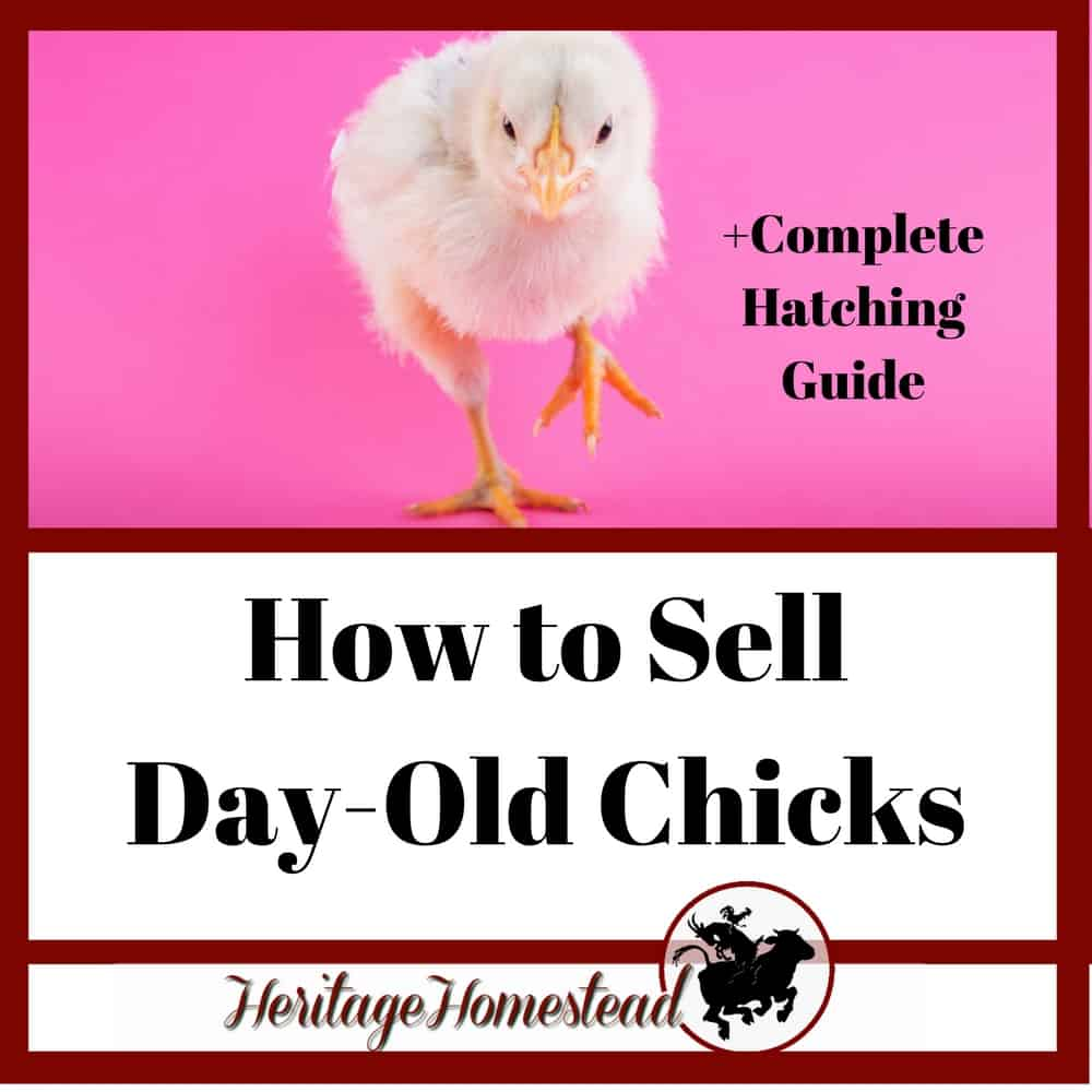 How to Make a Profit Selling Day Old Chicks by Hatching