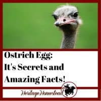 Ostrich egg and all the facts