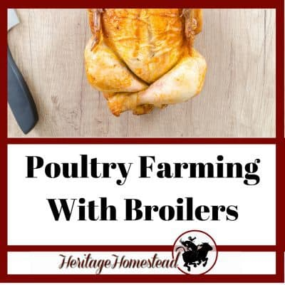 How to Start Poultry Farming with Broilers