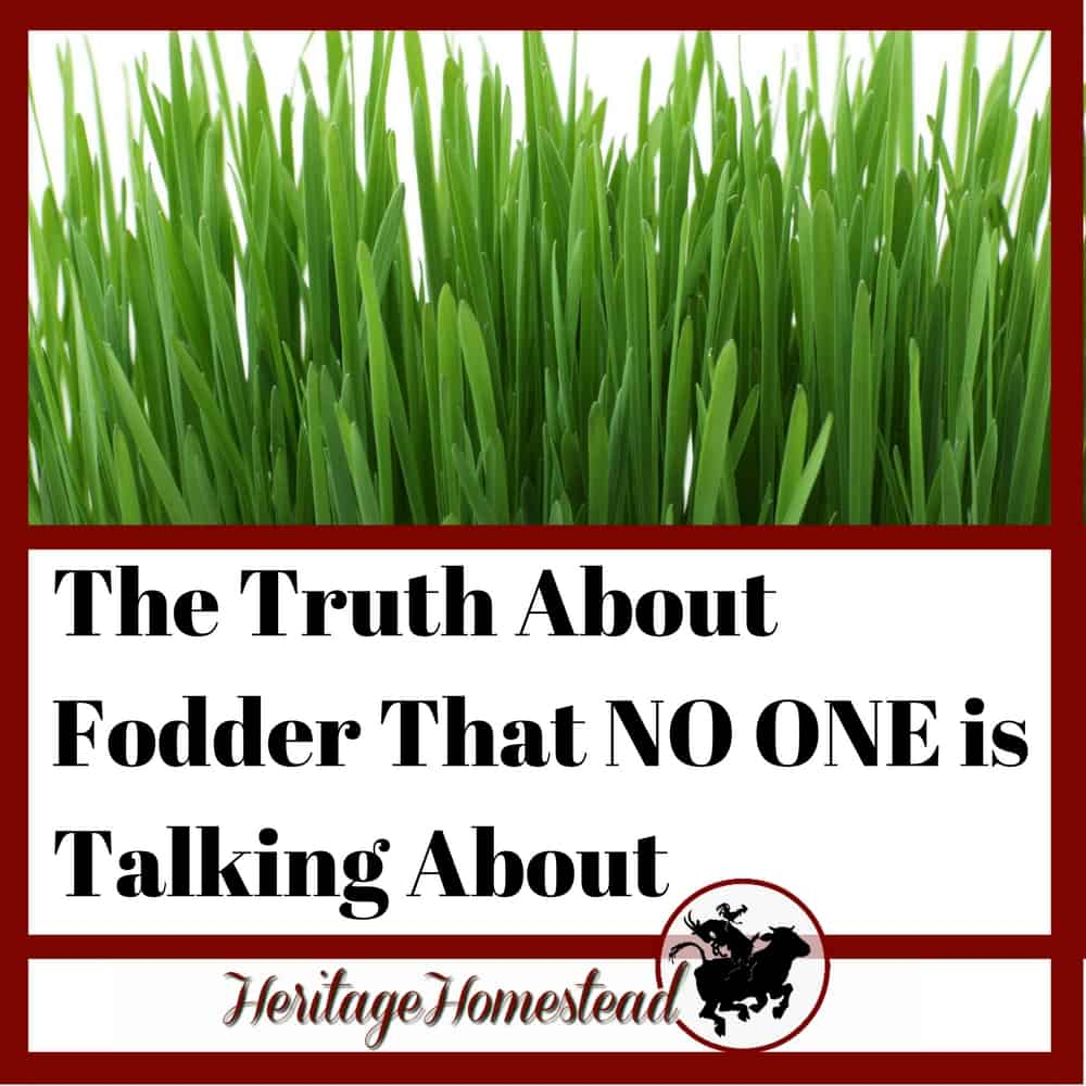 The Startling Truth About Fodder That NO ONE is Talking About