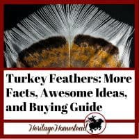 Turkey Feathers and the facts, ideas and buying guide