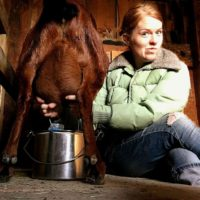 MILKING SUPPLIES NEEDED FOR GOATS