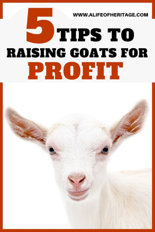 Raise goats for profit with these 5 tips. Free video course with PDF's and information!