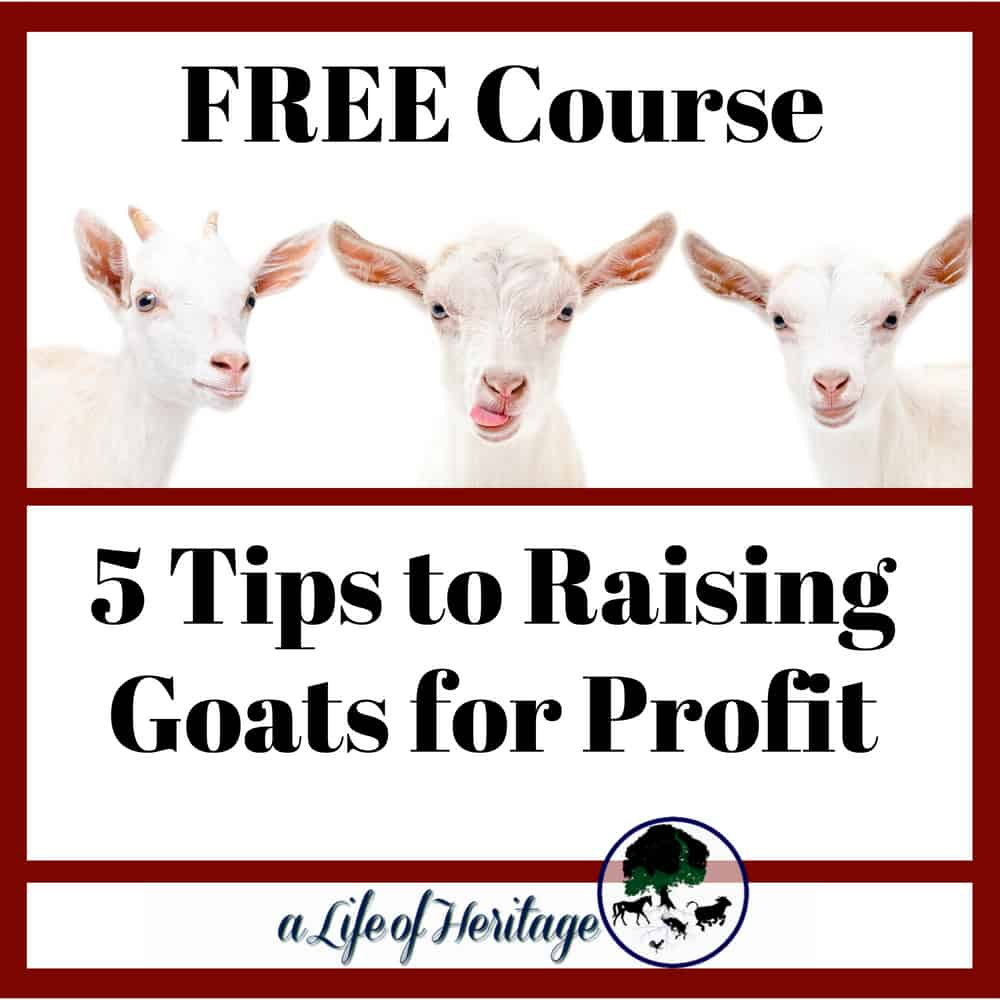 Raising Goats for Profit can be made easy when you have these 5 tips to help you. Free Course with video, PDF's and information.