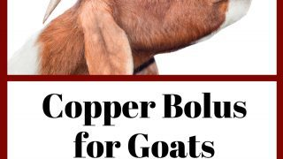 Copper Bolus for Goats: Your Complete Copper Guide!