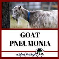 Goat pneumonia and what you need to know to save your goat. Free treatment plan