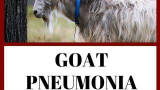 Goat Pneumonia: Causes, Symptoms, Treatment Plan