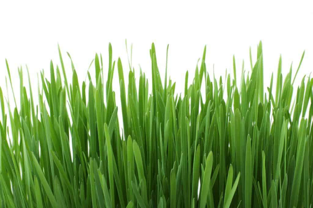 Your grass or hay sources may be lacking essential nutrients like copper.