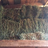 HAY FOR GOATS (PREPARE FOR WINTER MONTHS!)