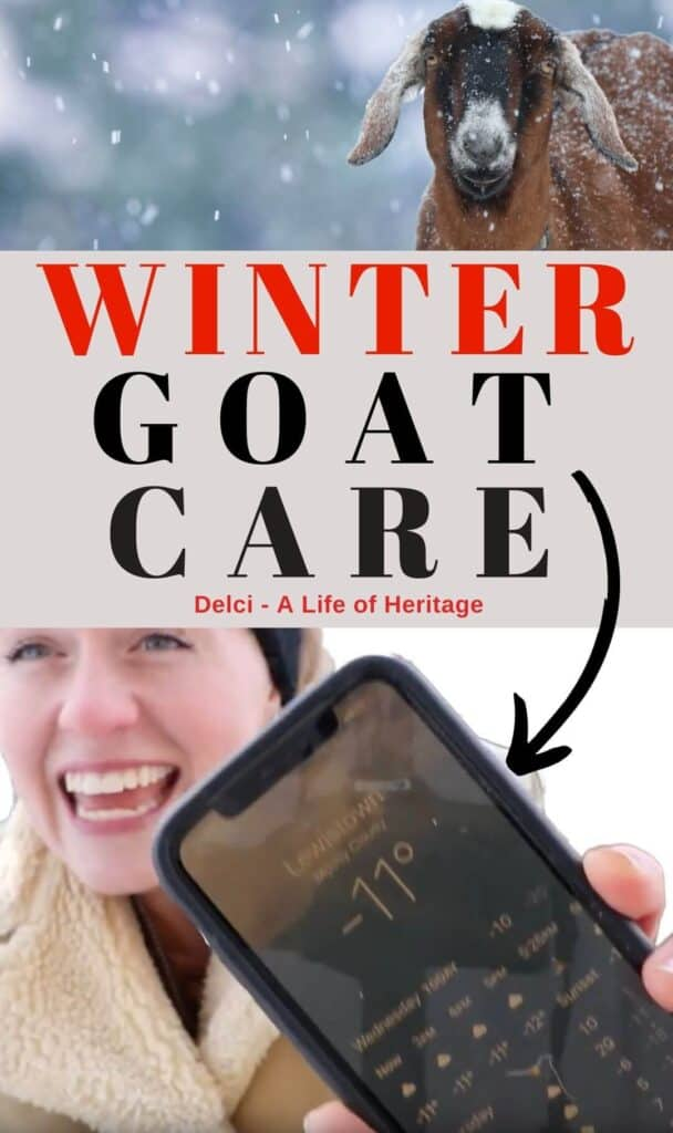 Goats in winter need to be prepared to handle the cold and wet. Learn what it takes to keep your goats healthy during really cold winters.