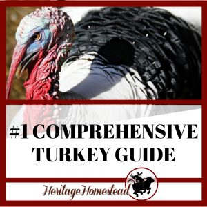 Find out all the information about turkeys here!