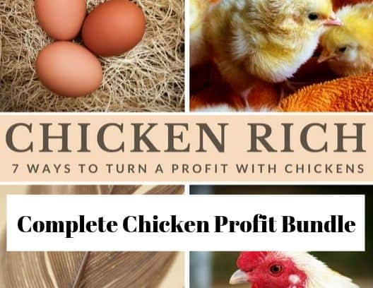 A poultry bundle to raise chickens for profit