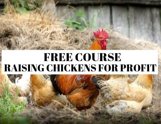 Free Course on how to raise chickens for profit