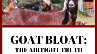 Goat Bloat: The Airtight Truth