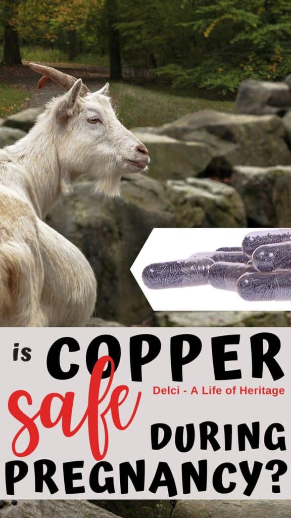 Right here you will learn if copper boluses are safe for pregnant goats