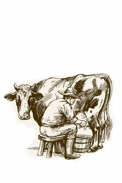 Man milking cow. He knows raw milk is safe. Do you?