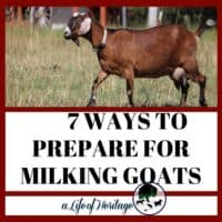 Prepare for milking goats in these 7 ways