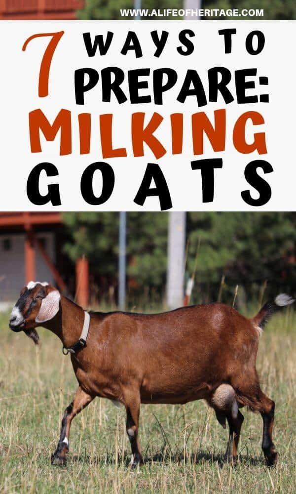 You can prepare for milking goats right here