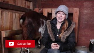 Are copper boluses safe for pregnant goats?