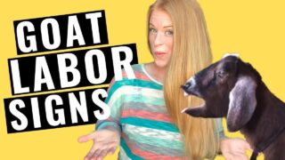 11 GOAT LABOR SIGNS YOU NEED TO KNOW!