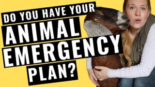 Emergency Plan for Goats