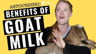 Astounding Benefits of Goat Milk!