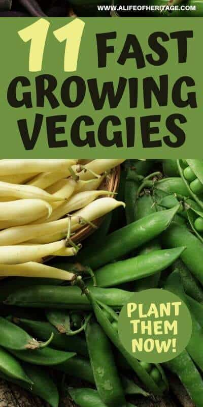 These veggies grow fast and are worth getting into your garden this year! Plant them now!