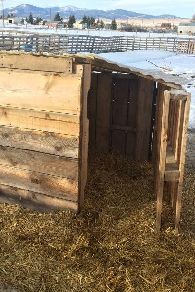 Pallet goat shelter in the goat pen