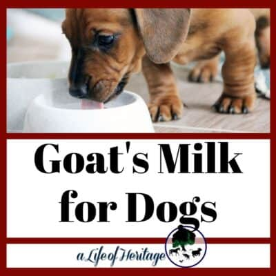 Goat's Milk for Dogs | What REALLY are the health benefits?