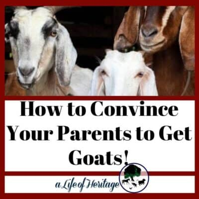 How to convince your parents to get goats
