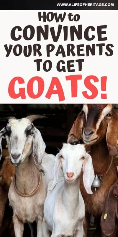 How to convince your parents to get goats. It can be done if you know how!