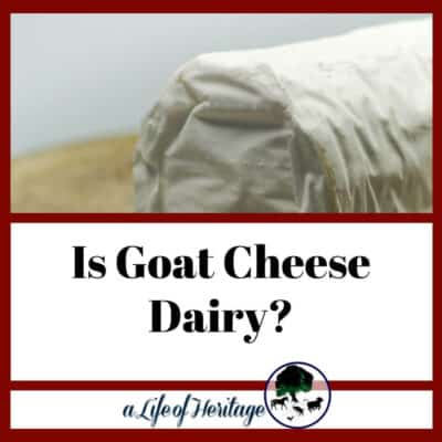 Is Goat Cheese Dairy? | Does Goat Cheese Have Lactose?