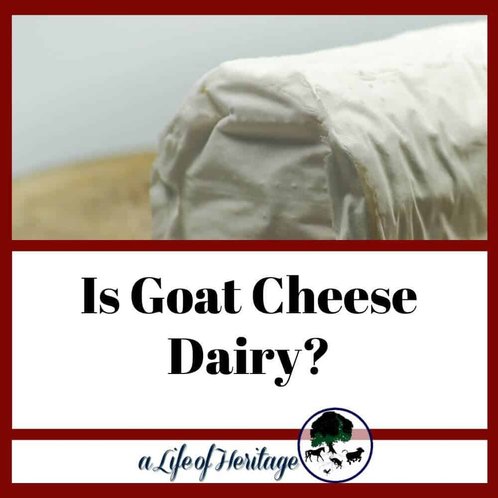 does goat cheese have lactose and is it dairy?