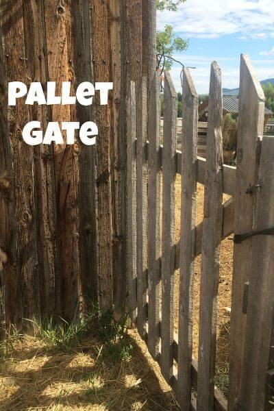 pallet gate in the goat pen