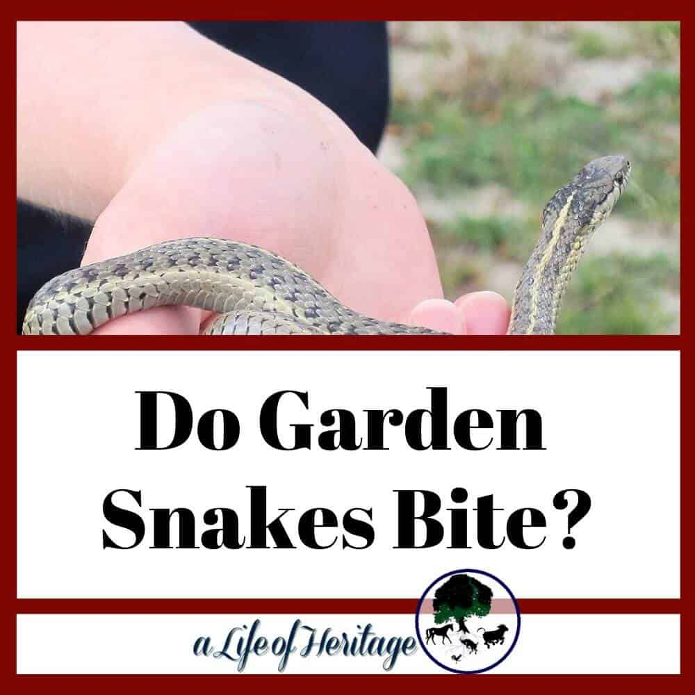 do garden snakes bite and if they do is it poisonous?