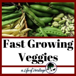 Ready to grow veggies fast? These ideas will be great for your garden this year!
