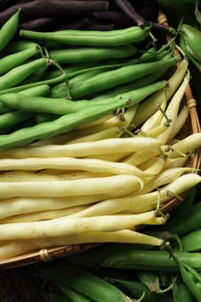 Green beans are our cash crop. I rely on them to grow quickly and produce a great harvest!