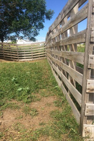 Pallet fence for goats