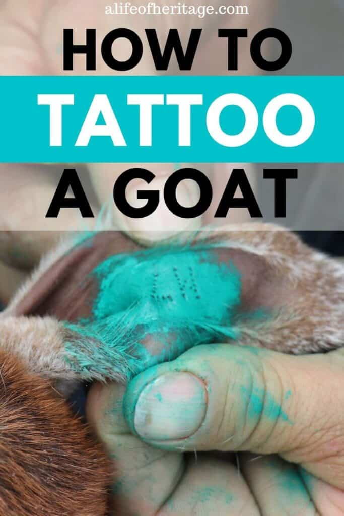 learn how to tattoo a goat here