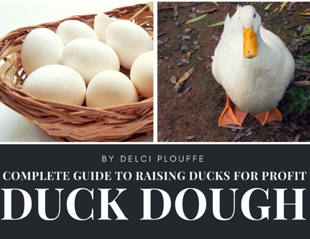 raising ducks for profit