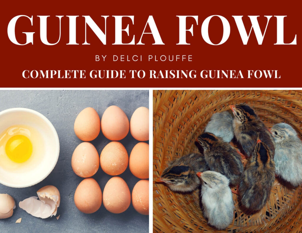 book on raising guinea fowl
