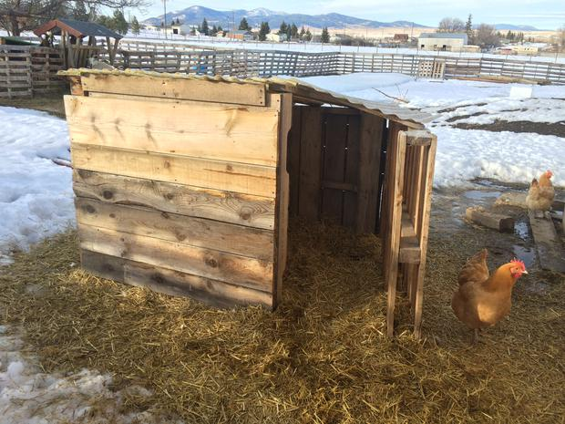 Goat House made using pallet boards